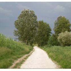 Escursioni in bici e passeggiate